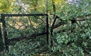 Des chutes d'arbres engendrées par le passage de la tempête Alex ont endommagé le zoo de Branféré, qui a dû fermer.