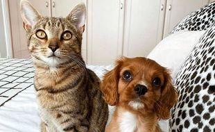 Les noms des chats et des chiens sont de plus en plus inspirés par les séries et la gastronomie.