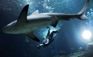 Pierre Frolla plonge avec les requins de l'Aquarium de Paris, le 11 novembre 2012.