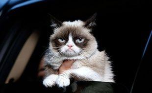 Grumpy Cat tire la tête à New York, le 15 octobre 2013.