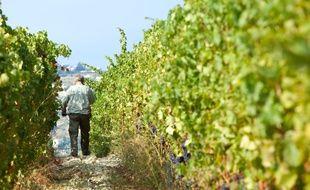Les vignes de Bellet et ses domaines dominent la ville de Nice.
