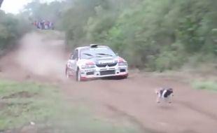 Une voiture de rallye pilotée par l'Uruguayen Fernando Zuasnabar a évité de justesse un chien se trouvant sur sa trajectoire lors d'une course organisée dans la région de Santa Cruz (Bolivie) le 28 août 2016.