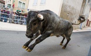 Deux taureaux se sont échappés dans l'Hérault (Illustration)
