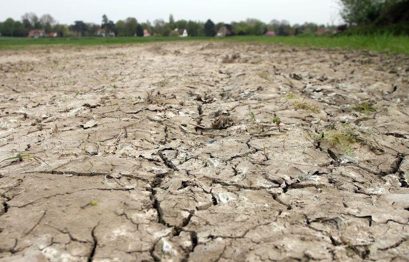 Reconnaissance de la sécheresse 2018 comme calamité agricole en Wallonie
