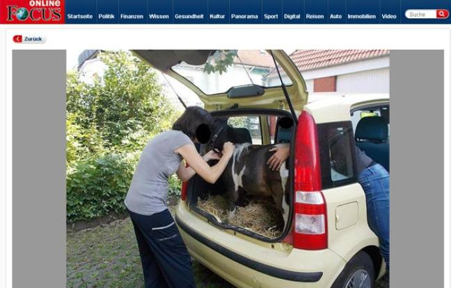 allemagne elle transporte un poney dans le coffre de sa voiture. Black Bedroom Furniture Sets. Home Design Ideas