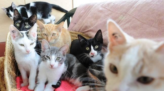 nantes a la spa plus de 300 chiens et chats attendent d 39 tre adopt s. Black Bedroom Furniture Sets. Home Design Ideas