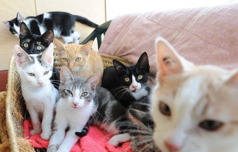 Nantes A La Spa Plus De 300 Chiens Et Chats Attendent D Etre Adoptes