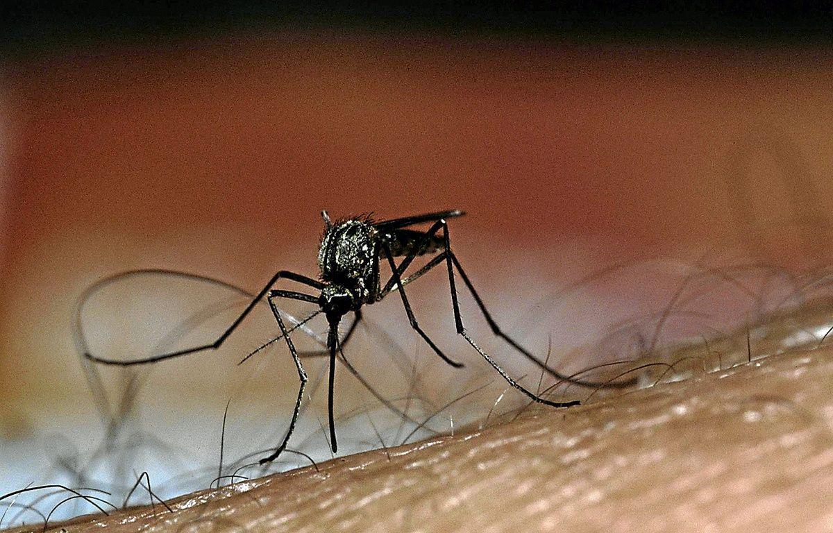 La dengue, véhiculée par un moustique, fait entre 15 et 20 000 morts par an. – M. Ernest / Superstock / Sipa
