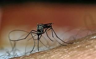 La dengue, véhiculée par un moustique, fait entre 15 et 20 000 morts par an.