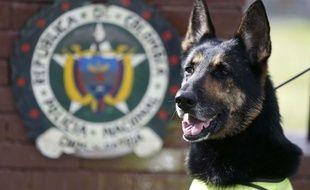 Sombra, une chienne renifleuse de drogues, menacée par les cartels de drogue en Colombie.