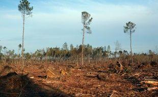 Le massif des Landes après le passage de la tempête Klaus en 2009