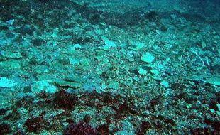 Du corail brisé en morceaux après le passage d'un cargo au-desus de la Grande barrière de corail, le 3 avril 2010