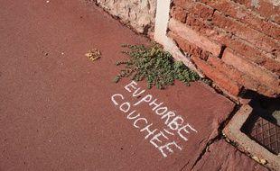 Boris Presseq a réalisé son opération d'inscription des noms de plantes dans plusieurs quartiers de Toulouse.