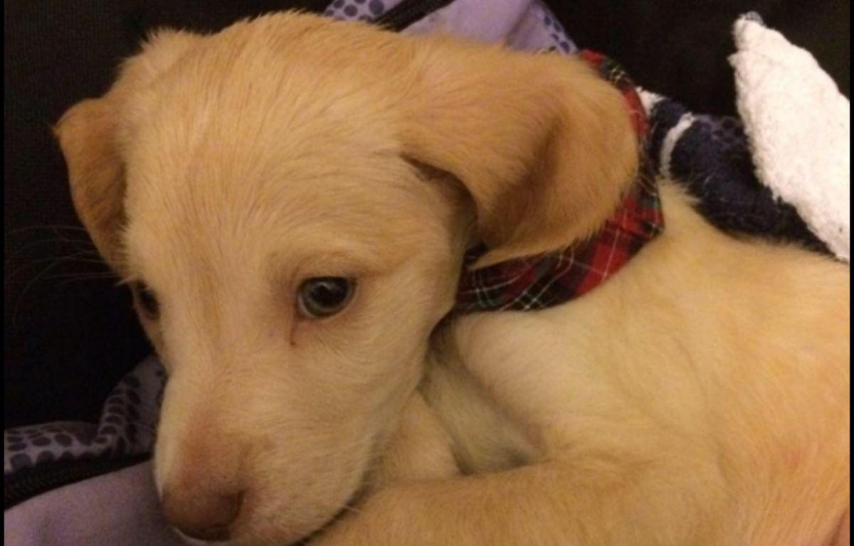 Lucky, le petit chien acheté sur Le Bon Coin, est décédé lundi 28 décembre. – Capture d'écran / Facebook