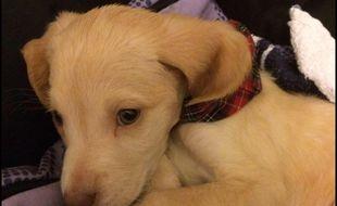 Lucky, le petit chien acheté sur Le Bon Coin, est décédé lundi 28 décembre.