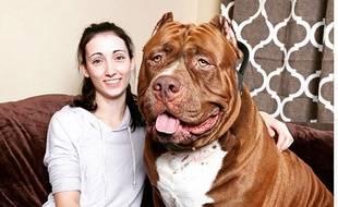 Hulk, pitbull de 79 kilos