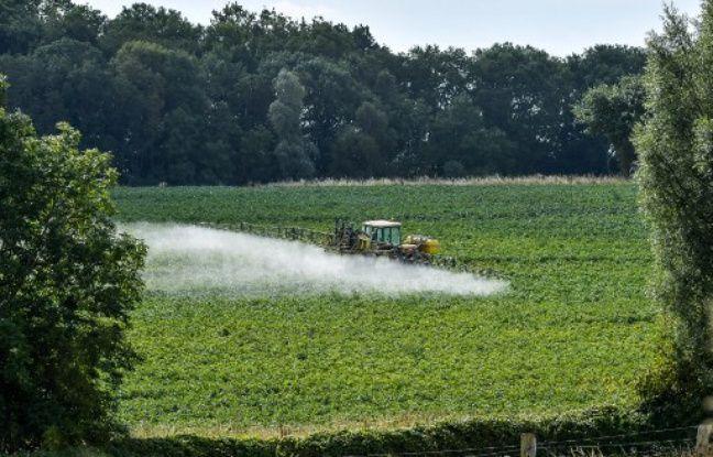 Pesticides: «Avec les SDHI, nous sommes à l'aube d'une potentielle catastrophe sanitaire»