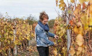 Une ingénieur de l'INRA, Agnès Destrac, pose dans les vignes le 6 novembre 2015 à Villenave-d'Ornon