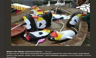 Les visiteurs déçus ont pris en photo les pingouins gonflables et les ont partagé sur Weibo.