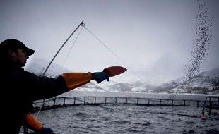 Un élevage de saumons en Norvège.