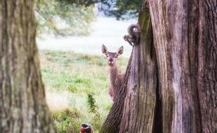 Le dessin-animé Bambi est un grand moment de chialade enfantine.PIC BY VILLAGER JIM/MERCURY PRESS (PICTURED: THE DISNEY-ESQUE SCENE AT CHATSWORTH HOUSE IN DERBYSHIRE THIS WEEKEND)