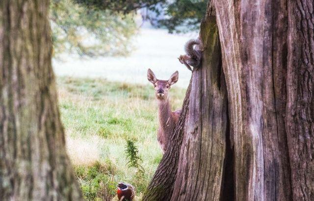 Un juge condamne un braconnier à regarder «Bambi» une fois par mois 640x410_pic-by-villager-jim-mercury-press-pictured-the-disney-esque-scene-at-chatsworth-house-in-derbyshire