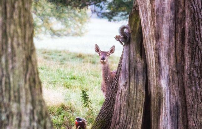 nouvel ordre mondial | Etats-Unis: Un juge condamne un braconnier à regarder «Bambi» une fois par mois