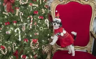 Un chien qui participe aux fêtes de Noël.