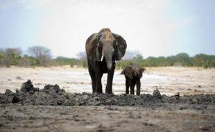 Le braconnage, qui génère un chiffre d'affaires estimé à 19 milliards de dollars par an, est devenu le quatrième plus grand marché illégal au monde, selon un rapport publié mercredi par l'organisation environnementale WWF.