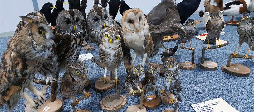 Il détenait près de 250 spécimens naturalisés en toute illégalité