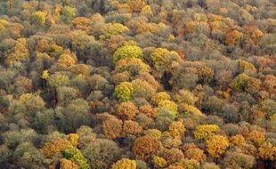 Conserver au moins un arbre mort ou vieux par hectare, laisser du bois mort au sol, ne pas utiliser de pesticides à moins de six mètres des rivières : le nouveau schéma de certification de la forêt, défini par l'association PEFC-France, veut améliorer leur gestion durable.