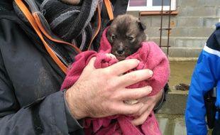 Les chiens ont été sauvés dans un élevage non déclaré de l'Aude.
