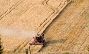 Fournisseur régulier en blé des pays du pourtour méditerranéen, la France voit sa compétitivité s'effriter au profit des pays de la Mer Noire, à cause d'un taux de protéines insuffisant pour les importateurs.