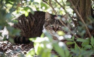 A Bully-les-Mines, dans le Pas-de-Calais, les chats errants sont très nombreux.