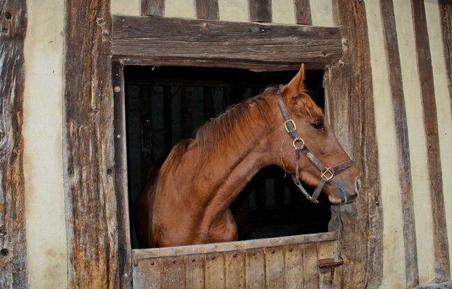 nouvel ordre mondial | VIDEO. Au péril de sa vie, il sauve des chevaux pendant les incendies aux Etats-Unis