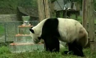 Capture d'écran d'une vidéo montrant le plus vieux panda mâle au monde, Pan Pan, et son gâteau d'anniversaire pour célébrer ses 30 ans.