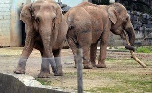 """François Hollande a demandé lundi à son ministre de l'Agriculture Stéphane Le Foll """"d'approfondir les éléments de diagnostic de l'état sanitaire"""" des deux éléphantes de Lyon, potentiellement tuberculeuse, menacées d'euthanasie, selon la Fondation Bardot."""