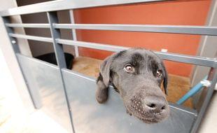 ST SEBASTIEN SUR LOIRE, le 21/11/2013 Photo d 'un chien recueilli par l'association Urgence maltraitance animale