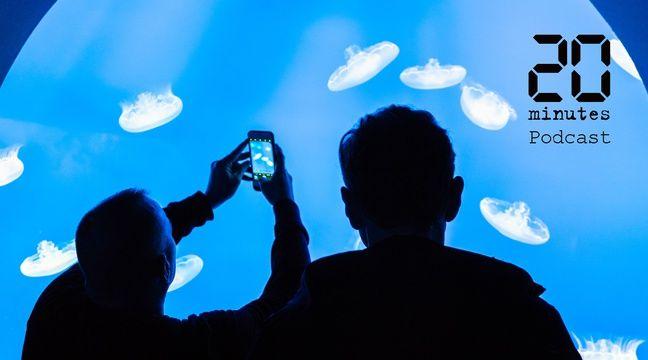 Les résidents de l'aquarium de Saint-Malo flippés au retour des visiteurs?