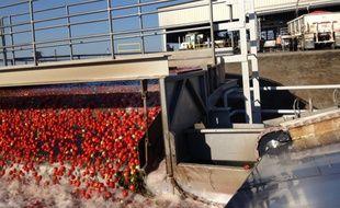 Dans «L'empire de l'or rouge», le journaliste Jean-Baptiste Malet relate ses deux ans d'enquête sur les dessous peu reluisants de la tomate d'industrie.