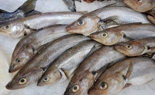 captures de poissons datant rencontre un homme chypriote turc