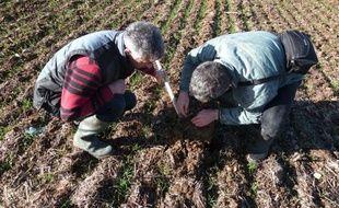 """Laisser la terre reposer pour qu'elle travaille davantage et s'en remettre à la nature et aux vers de terre, les meilleurs des ouvriers agricoles. L'agriculture """"sur sol vivant"""" convainc les producteurs qui ont sauté le pas."""