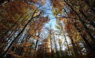 Coucher de soleil dans une forêt française