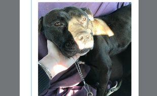 Gucci, le chien de 3 ans traîné derrière un scooter, va mieux.
