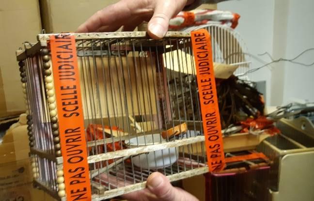 Une cage utilisée pour capturer des chardonnerets élégants.
