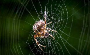 Une araignée en train de tisser sa toile (image d'illustration).