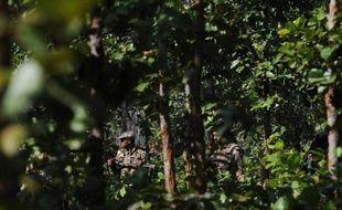Au moins 21 maoïstes indiens ont été tués lors d'une série d'affrontements vendredi avec les forces de sécurité dans l'Etat du Chhattisgarh (centre), l'un des bastions de cette rébellion d'extrême-gauche qui dit lutter pour la défense des tribus et des paysans sans terre.