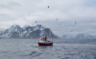 Un petit bateau de pêche au cabillaud, au large des îles Lofoten en Norvège, le 5 avril 2011.