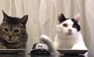 La vidéo de deux chats appuyant sur des sonnettes pour avoir leurs croquettes a fait le tour de la toile, en mars 2017.