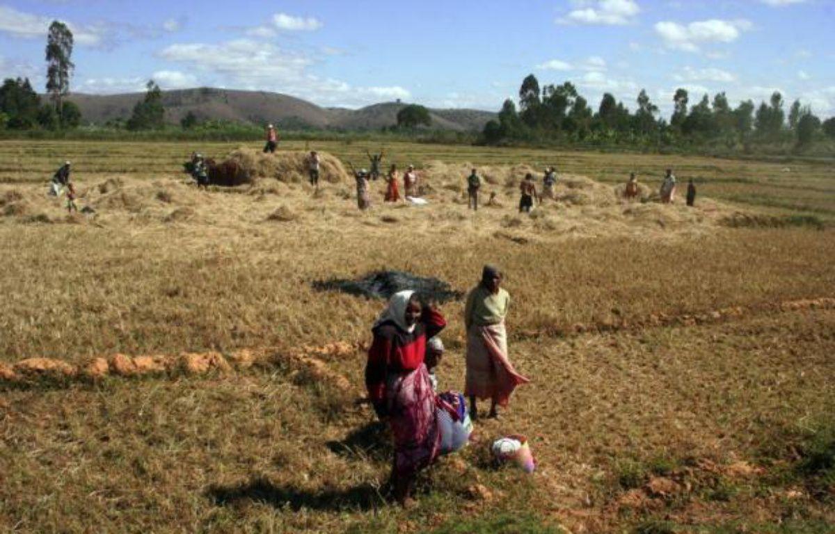 La course aux surfaces agricoles en Afrique, achetées ou louées pour produire du biocarburant pour les Occidentaux ou nourrir l'Asie, est une bombe à retardement sur un continent qui ne mange pas partout à sa faim. – Gregoire Pourtier afp.com